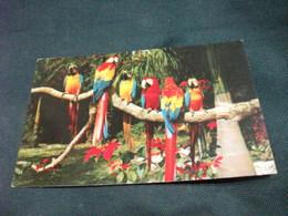 UCCELLO BIRD GRUPPO PAPPAGALLI PANAMA GUACAMAYOS Y POINSETTIAS MACAWS AND POINSETTIAS - Vogels