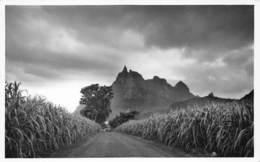 Mauritius Carte De Luxe, Photo Jean-Louis Curepipe Beautés De L'Ile Maurice La Montagne, Cannes à Sucre  Barry 1938 - Mauritius