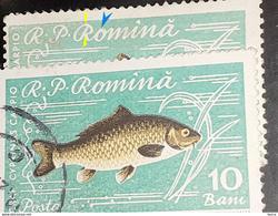 """Errors Romania 1960, MI 1927, Fishes Crap , With Error Letter""""o"""" Similar Item Number 852719749 - Variedades Y Curiosidades"""