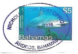 Bahamas: Caribean Reef Shark - Fische