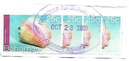 Bahamas: Queen Conch - Meereswelt