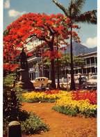 Africa Port Louis Flamboyant Devant L'hotel Du Gouvernement Ile Maurice Mauritius Photo Siegfried Sammer  Barry 1972 - Mauritius