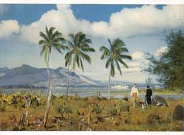 Africa Port Louis Vue De La Pointe Cocos  Ile Maurice Mauritius Photo Siegfried Sammer  Barry 1974 - Maurice