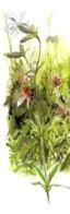 Marque-page °° Salamandre Et Terre Vivante - Agenda De La Nature Au Jardin 2020 - Coccinelles - 6x18 - Marque-Pages