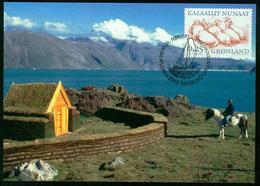 Mk Greenland Maximum Card 2000 MiNr 347 | Greenland Vikings, Walruses - Cartes-Maximum (CM)