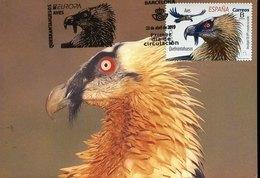 49601 Spain, Maximum 2019  Bird Vogel Oiseau, Quebrantahuesos - Adler & Greifvögel