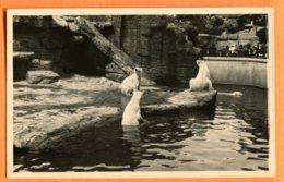 FEL1201, Ours Blanc, Zoo, Non Circulée - Ours