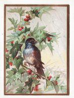 Chromo   Sans Pub Gaufré   Oiseau Sur Une Branche    Grand Format     15.5 X 11.2 Cm - Cromo