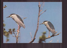 HERON BIHOREAU - Vogels