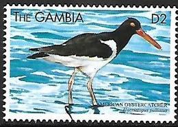 GAMBIA - MNH - 1999 : American Oystercatcher  -  Haematopus Palliatus - Vogels