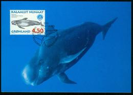 Mk Greenland Maximum Card 1998 MiNr 318 Y | International Year Of The Ocean, Whales, Long-finned Pilot Whale - Cartes-Maximum (CM)