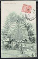 "Malacca - Correspondance De Singapore Pour St Martin De Londres (Fr) Du 21-1-1914 - Cpa ""Singapore. Traveller's Tree - - Malacca"