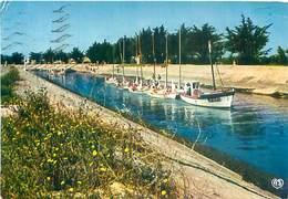 Ile De Ré - Le Port - Sortie De L' Ecole Des Voile   AW 636 - Ile De Ré