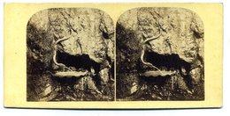 Photos Stéréoscopiques - Allemagne - Baden  Baden - Fontaine Du Serpent -  E 174 - Photos Stéréoscopiques