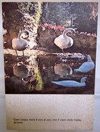 Versi Aforismi Citazioni   Uccelli Cigni   Cartolina Edizione Grafica Don Bosco - Filosofia & Pensatori