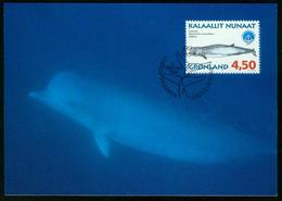 Mk Greenland Maximum Card 1998 MiNr 319 Y | International Year Of The Ocean, Whales, Northern Bottle-nosed Whale - Cartes-Maximum (CM)