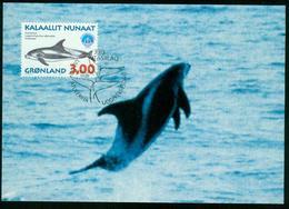 Mk Greenland Maximum Card 1998 MiNr 317 Y | International Year Of The Ocean, Whales, White-beaked Dolphin - Cartes-Maximum (CM)