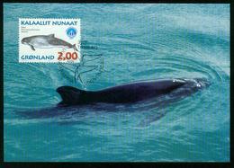 Mk Greenland Maximum Card 1998 MiNr 316 Y | International Year Of The Ocean, Whales, Common Porpoise - Cartes-Maximum (CM)