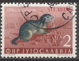 PIA - TRIESTE B  - 1954 : Fauna Jugoslava - Spermofila Europea -  (Yv 92) - Gebraucht