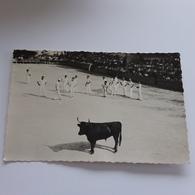 Feria  A Vauvert Gard , Raseteur 1950 Photo Studio Monjon . - Lieux