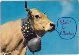 Humour / Vache / Salut Les Cloches - Koeien