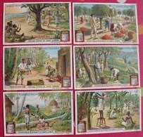 6 Chromo Liebig. Arbres Fruitiers. 1907. S 878. Chromos. édition Française - Liebig