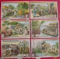 6 Chromo Liebig. Plantes Utiles Exotiques. 1909. S 970. Chromos. édition Française - Liebig