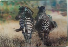 Zebras  - Stereo / 3D / Lenticular Postcard  - Postcard Printed In CZ - Cebras