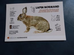 LAPIN NORMAND NORMANDIE - Dieren