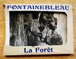 CPA France - Carnet 20 Photos Fontainebleau La Forêt - Fontainebleau