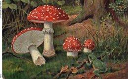 Carte Champignon - Funghi