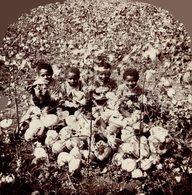 A WATERMELON QUARTETTE  7*8CM Fonds Victor FORBIN 1864-1947 - Africa