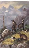 Jagd Chasse, Hunting. Steinbock Capricorn  Capricorne  A.Schönian Old Cpa. 1906 - Animali