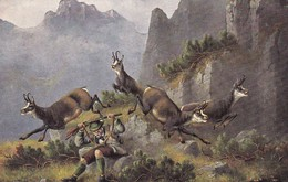 Jagd Chasse, Hunting. Hunter Steinbock Capricorn  Capricorne  Jäger Old Cpa. Ca. 1900 - Animales