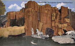 Germany Koeln Zoo Garden Polar Bears Postcard - Autres