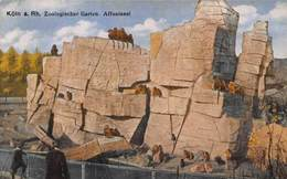Germany Koeln Zoo Garden Monkeys Apes Postcard - Autres