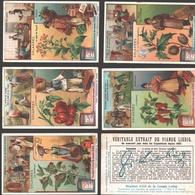 Liebig - Vintage Chromos - Series Of 6 / Série Complète - Solanées - En Français - Liebig