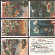 Liebig - Vintage Chromos - Series Of 6 / Série Complète - Fleurs De Nuit - En Français - Liebig