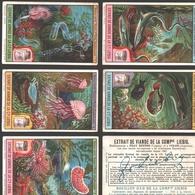 Liebig - Vintage Chromos - Series Of 6 / Série Complète - Animaux Marins, Poissons Et Plantes Phosphorescents - Français - Liebig