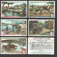 Liebig - Vintage Chromos - Series Of 6 / Série Complète - Elevage Et Entretien D'animaux Utiles - En Français - Liebig