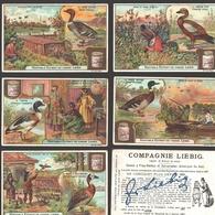 Liebig - Vintage Chromos - Series Of 6 / Série Complète - Les Canards - En Français - Liebig