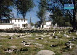 1 AK Midway-Atoll * Albatrosse Auf Midway - Ein Außengebiet Der USA Im Nördlichen Pazifik * - Isole Midway