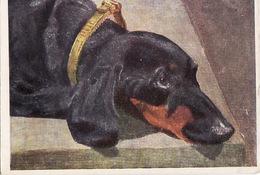 Dog. Les Chiens.dachshunds. Teckel Dackel - Cani
