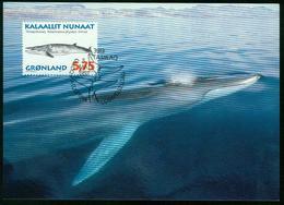 Mk Greenland Maximum Card 1997 MiNr 306 Y | Whales, Fin Whale - Cartes-Maximum (CM)