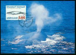 Mk Greenland Maximum Card 1997 MiNr 305 Y | Whales, Blue Whale - Cartes-Maximum (CM)