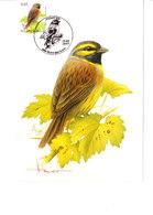 Buzin - Bruant Zizi - 1985-.. Birds (Buzin)