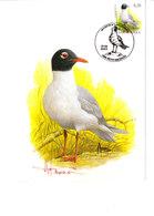 Buzin - Mouette Melanocephale - 1985-.. Birds (Buzin)
