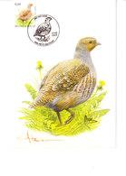 Buzin - Pedrix Grise - 1985-.. Birds (Buzin)