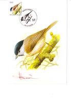 Buzin - Mésange Nonnette - 1985-.. Birds (Buzin)