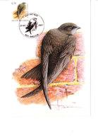 Buzin - Martinet Noir - 1985-.. Birds (Buzin)